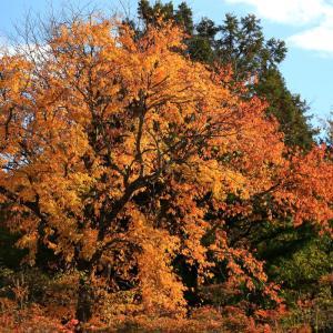 秋色深りつつある里山散歩!(喜連川丘陵)