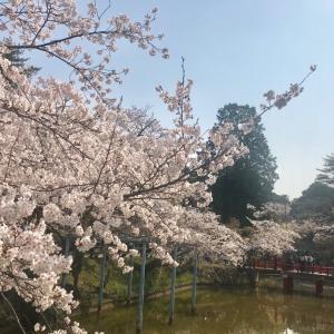 津偕楽公園お花見