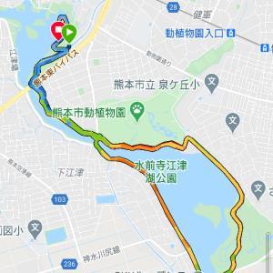 体感26℃以上で、江津湖20キロペース走