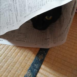 新聞紙に入る