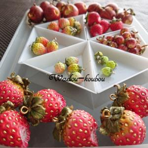 どっさり果物