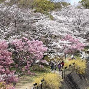 桜も見れて良かった。