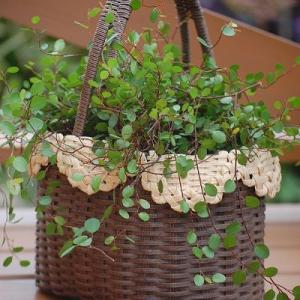 ナチュラルかごに植物を飾る。