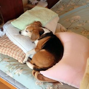 幸せそうに寝ているのを見ているのが幸せ