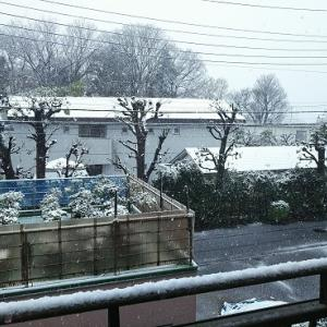 本日は降雪のため臨時休業となります