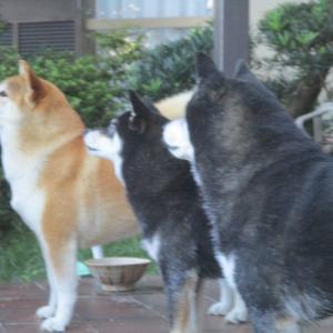 4頭、まったり・・・・