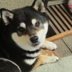 葵、8歳になりました!
