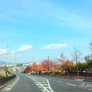 日本★大阪|退院したのは良かったけど、病室に忘れ物。(2020.11.16)