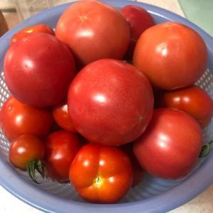 最近のトマトの値段にほくそ笑む