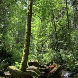 森林浴&ラズベリーピッキング