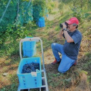 ワインぶどうの栽培・ワイン醸造体験の動画制作中