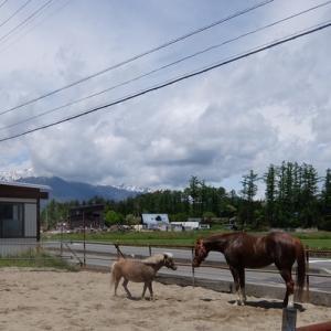 馬を見るのは面白い