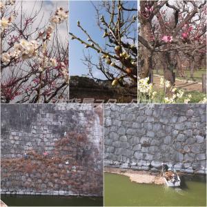 連休の2日目・・・大阪城公園