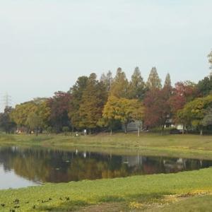 江津湖の朝