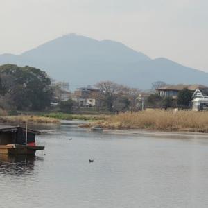 冬の江津湖にて(1)