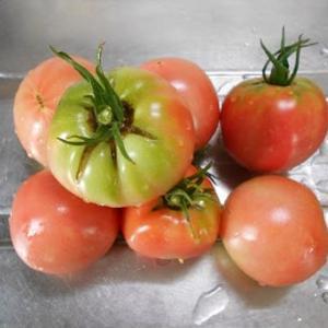 今年はトマトの当たり年
