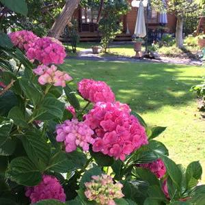 紫陽花とモナルダ