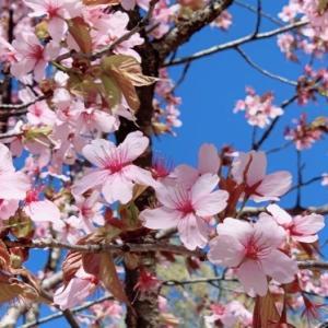 令和2年5月桜の季節