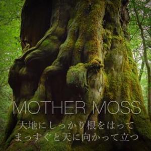 11/30(土) ハピレボのお知らせ⑧ MOTHER MOSS(マザモス)