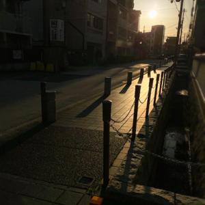 日曜日の夕方に眺める「高槻城跡公園の桜」
