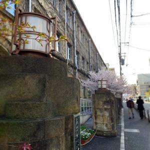 週末の京都で早咲きの桜を見送る