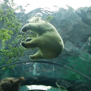 札幌の円山動物園の「ホッキョクグマ館」が気になる