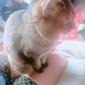 猫の可愛い肉球スタンプ