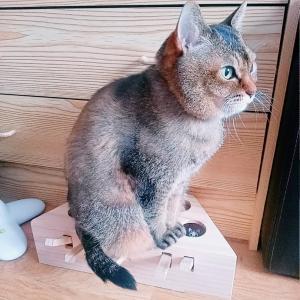 猫のおもちゃ【もぐら叩き】