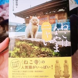 癒しの猫の本【大切な言葉が沢山!】