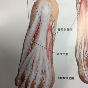 足底筋が痛い人ってどうしたらいいの?