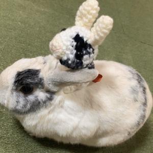 愛兎ちゃんとぬいぐるみ&あみぐるみが、一緒に写った写真をお送りいただきました☆(るるちゃん)