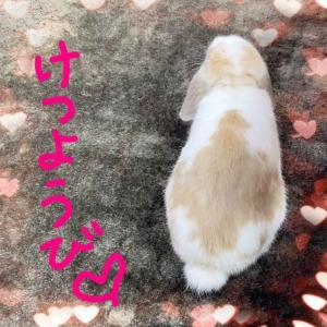 けつようび☆うさくらカレンダー、知ってるうさちゃんいっぱいで楽しい!