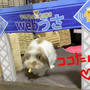 webうさ☆ありがとうございました!NetShopは、年末までOPENします!!