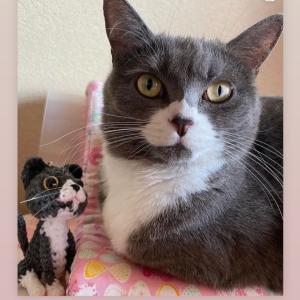 猫のあみぐるみオーダー作品を、インスタで紹介下さってます☆(ここちゃん)
