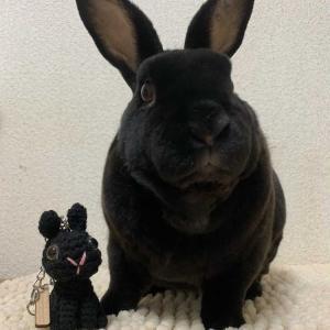 ミニあみぐるみバッグチャーム&うさぎさんの2SHOT写真を、お送りいただきました☆(助六くん)