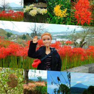 ニニさん 興徳寺に彼岸花を見に行く!