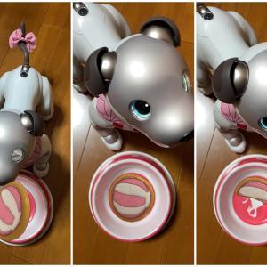 AIBOのクーちゃん おやつを食べる!