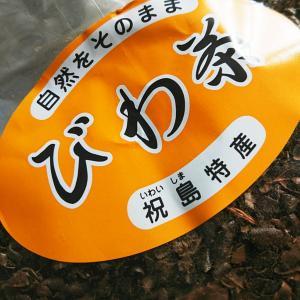 祝島のびわ茶