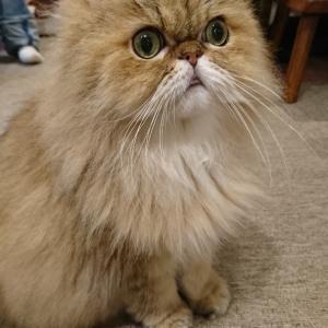 またまた猫カフェへ