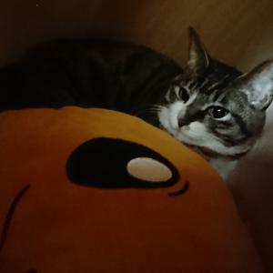 ララちゃんと猫のダヤン