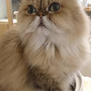 久しぶりの猫カフェ