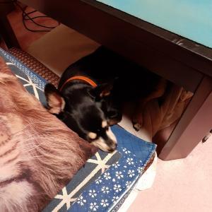 ★テーブルの下のしっくり感