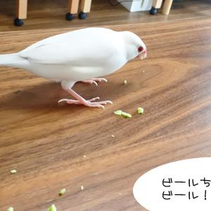枝豆 & ネタやらなんやら