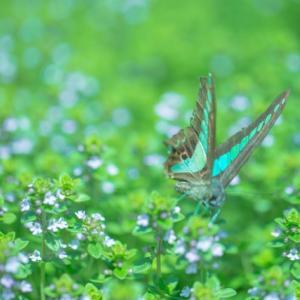 「コトバの師匠」を受け入れたくなる「コトバの蝶達」。