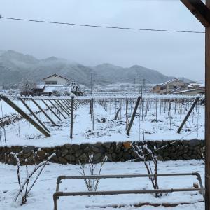 山梨クラスレッスン本日は雪の影響によりお休み!