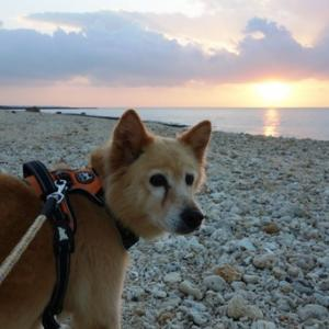 日の出の散歩