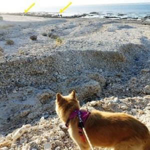 朝から浜散歩