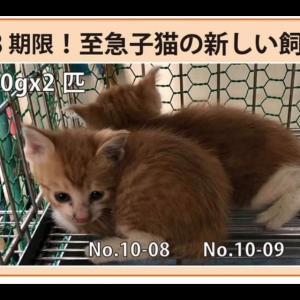 """""""10/8期限!子猫の新しい飼い主さん募集!!"""""""