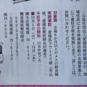 愛媛県下で140頭 地域猫対策 支援事業(無料) 生後6ヶ月以上のメスの野良猫限定