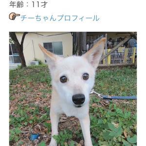 """""""10/13 犬猫里親さがし会参加犬猫紹介"""""""